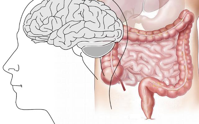feed the gut brain food