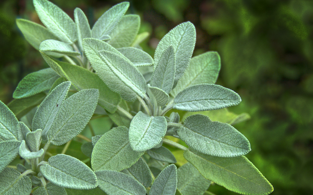 sage is great for mental health