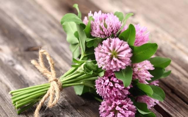 herbs for hormonal balance